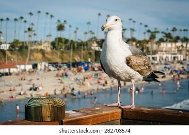 Seagull on the pier in Oceanside, California.