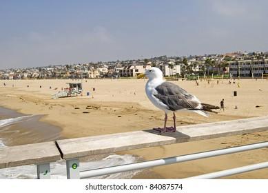 Seagull on pier overlooking Hermosa Beach, California