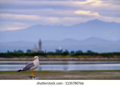 Seagull on a pier with sea, church and mountains on the background
