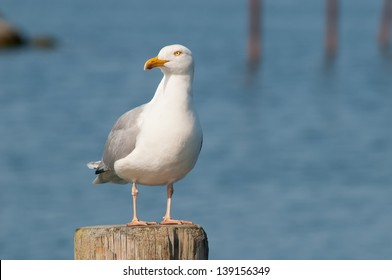 seagull on pole in the harbor