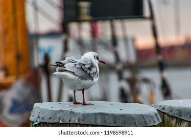 seagull on the river