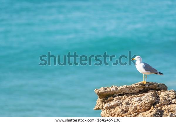 seagull-on-rock-blue-sea-600w-1642459138