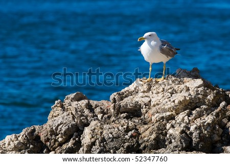 Seagull on a rock by the sea