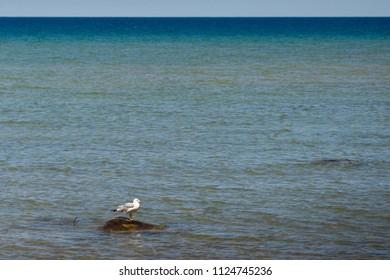 Seagull on a rock in Lake Michigan