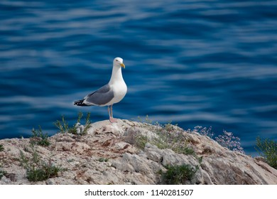 Seagull on the rock on water background