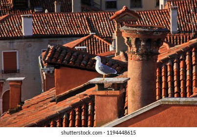 Seagull on the roof of a house in Venice, sunset