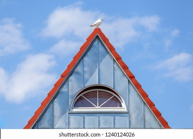 Seagull on a rooftop