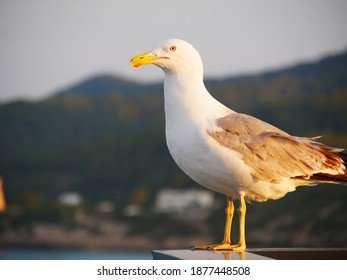 Seagull auf dem Dach auf der ibiza