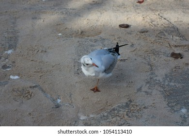 seagull on sand sea winter