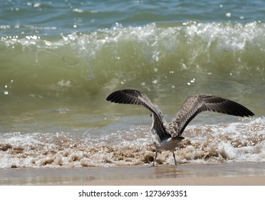 Seagull on the sea waves