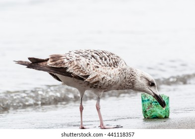 Seagull on the seashore