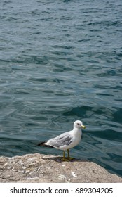 Seagull on shore next to water in Toronto, Canada