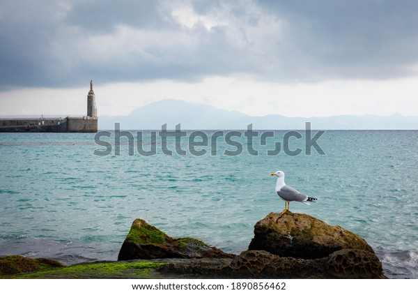 A seagull on a stone, in the town of Tarifa, Cadiz province, Spain, off the coast of Morocco, Africa