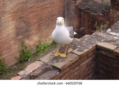 Seagull on stone wall