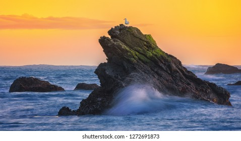 Seagull on top of coastal rocks