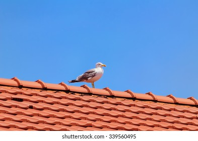 Seagull on the Top of the Roof