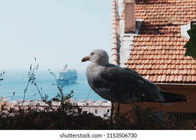 Seagull on a wall with a boat in the background