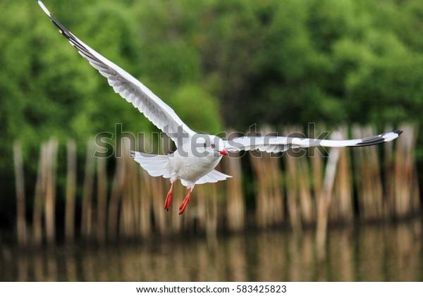 Seagull on the wild