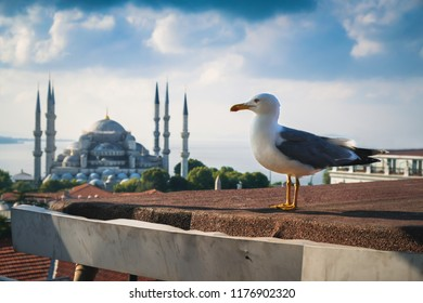 Seagull over Blue Mosque or Sultanahmet Camii in Istanbul, Turkey. Beautiful scenic view of Bosphorus skyline and traditional historical mosque in summer.