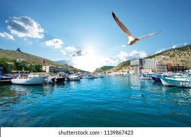 Seagull over boats in bay of Balaclava