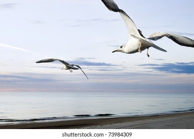 seagull over sea at sunset