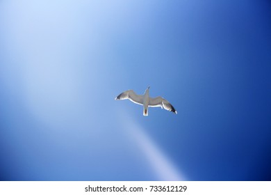 A seagull over the skies of Italy
