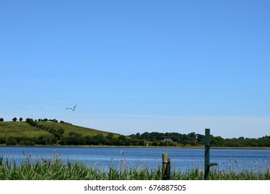Seagull over the Water, Devenish Island, Lower Lough Erne, County Fermanagh, Northern Ireland