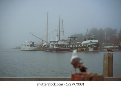 Seagull Overlooking Foggy Marina Shipyard