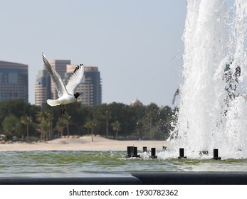 Seagull is passing to the sea side fountain