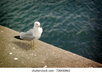 Seagull Perched by the Water
