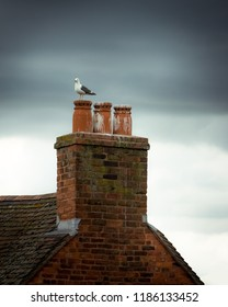 A seagull perched on a chimney pot, in front of a dark, moody sky. Worcester, UK