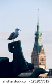 Seagull perching on a sculpture with Hamburg town hall spire in the background. Binnenalster, Hamburg, Germany