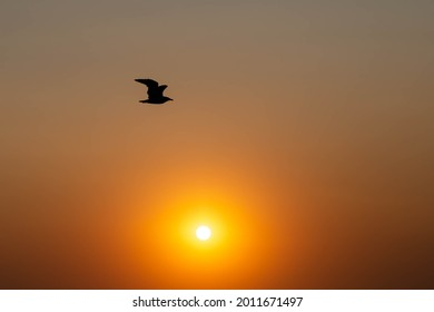 Seagull in the photo of the sunset. The silhouette of a seagull. Setting sun. romance. Tourist photo