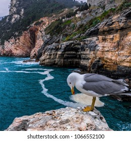 A seagull photobombering the landscape photo in Portovenere, Liguria