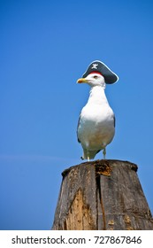 "Seagull is a pirate. Seagull in a pirate hat with the ""Jolly Roger"". Funny proud seagull sitting on a pile."
