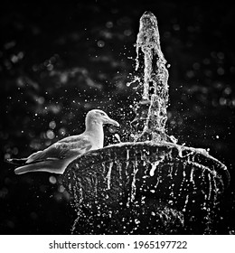 A seagull resting by a fountain in a parc in Calais