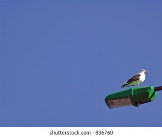 seagull resting on a street lamp