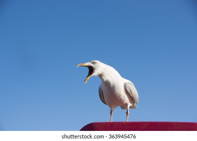 Seagull screaming and looking left perched on a red platform against a blue sky