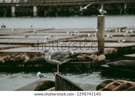 Seagull with Sea Lions
