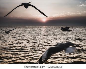 Seagull  seabird flying over the sea on the background of sunset (sunrise, beach, sunset - Shutterstock ID 1258578718