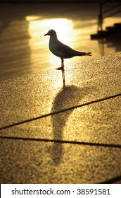 Seagull with shadow