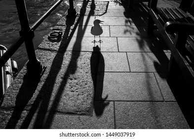 Seagull shadow on Mevagissey harbour, Cornwall, UK