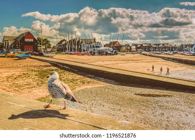 A seagull with a shadow walk along a wooden beam in the foreground of a landscape image of Whitstable, kent, uk, beach and jetty.