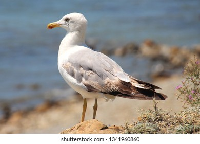A seagull sits on a cliff and looks towards the sea, waiting for interesting