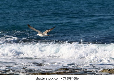 the seagull sits on the seashore