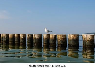Seagull sitzt auf einem Wellenbrecher zum Ausruhen.