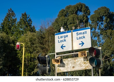 """Seagull sitting on a """"Large Dock / Small Dock"""" sign in Seattle, Washington, USA"""
