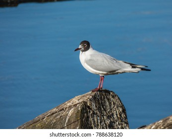 Seagull sitting on log on river