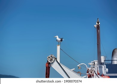 A seagull sitting on the part of a fishing boat in the Aegean sea