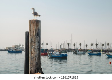 Seagull sitting on pole in the harbour of Cascais, Portugal